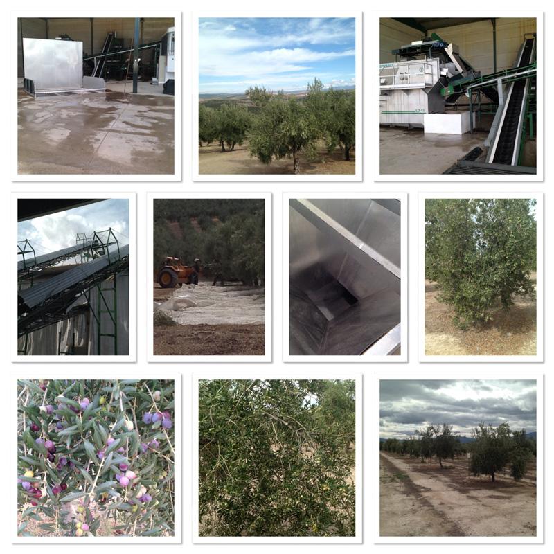 De la viña al olivo